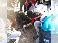 Arboreto